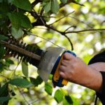 Disputes over trees & hedges – what you need to know