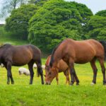 Agricultural law, grazing licences and tenancies